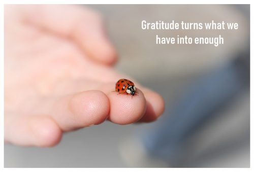dankbaarheid-gratitude-genoeg